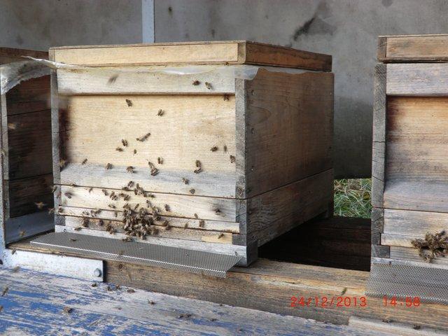 Bienenflug am 24.12.13