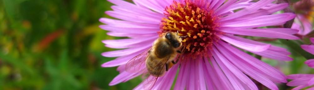 Bienenzüchterverein Mittlerer Jagstgau Westernhausen e.V.