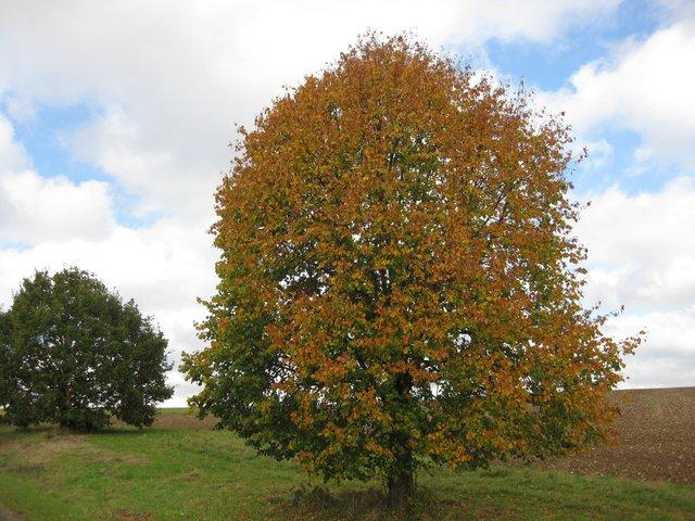 Herbst Schöntal